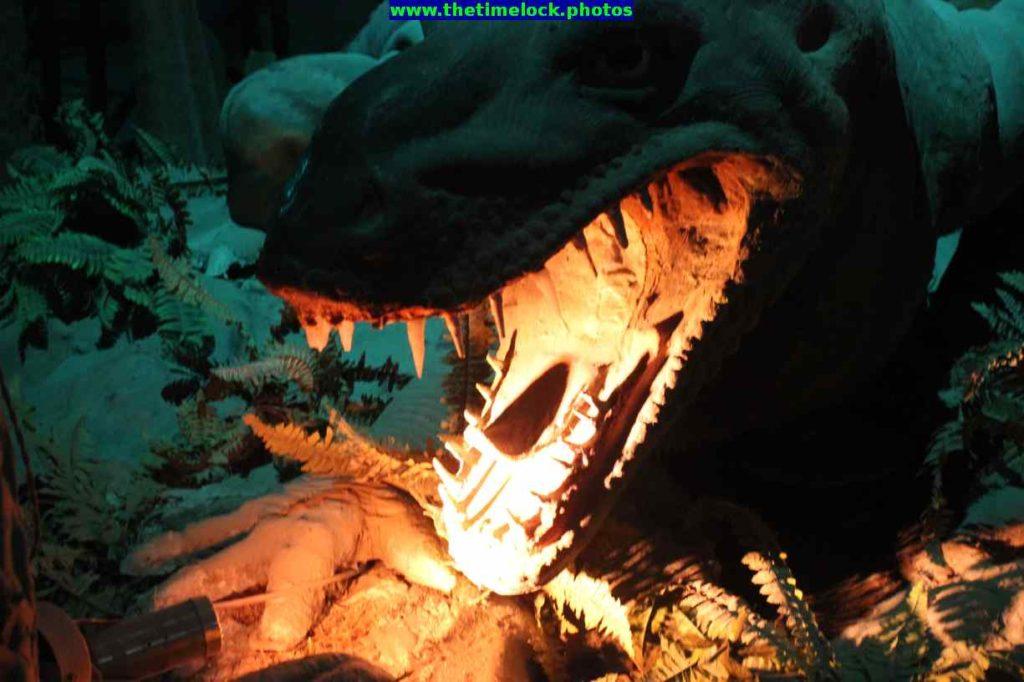 prehistoric section