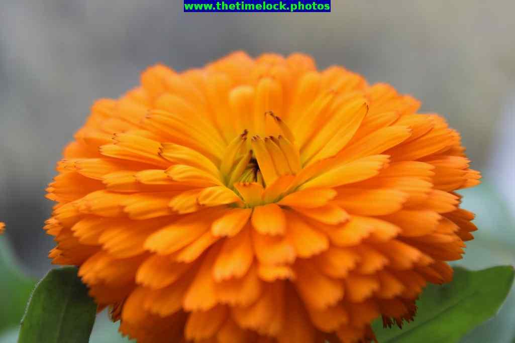 terrace garden flowers